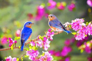 Uccelli a Primavera